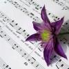 BGH zu Musical-Rechten