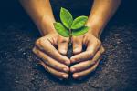 OLG Hamm: Pflanzenschutz- oder Düngemittel - OLG Hamm grenzt ab